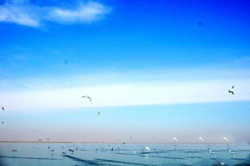 图为乌梁素海成群结队的鸟儿。 杨爱群 摄